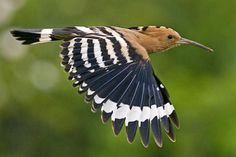 Wayward exotic bird lands in Britain by mistake | The Times