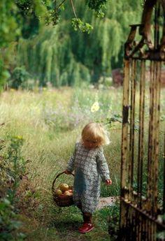 picking apples - Looks like Luna!!
