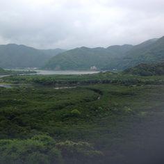 Mangrovenwälder in Amami