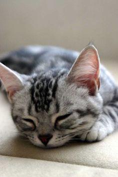 Love a Little, Grey Kitty