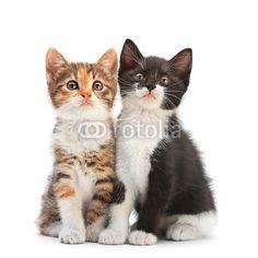 Two kitten sitting