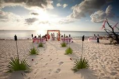 Fan palms used for aisle markers