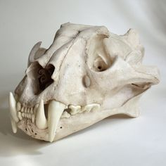 Hey, I found this really awesome Etsy listing at https://www.etsy.com/listing/89474019/tiger-skull-replica