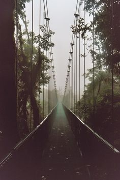 #Green Bridge