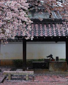 ' ' 京都の桜本隆寺 ' 2016.4.7撮影 ' #kyoto #京都 #本隆寺 #西陣 #cherryblossom #桜 #サクラ #散り桜 #team_jp_ #gf_japan #igersjp #ig_japan #ig_nippon #wu_japan #loves_nippon #lovers_nippon #japanfocus #icu_japan #wonderful_places ' #team京都 #team_jp_西 京都 #team_jp_春色2016 #japan_daytime_view桜2016 #はなまっぷ桜 #ぶらり京都撮影部 ' #k_京都桜2016 by kazuhiro715