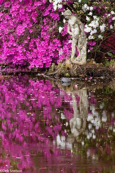 magnolia gardens charleston sc. Beautiful Landscapes, Beautiful Gardens, Beautiful Flowers, Beautiful Places, Charleston South Carolina, Charleston Sc, Charleston Gardens, Magnolia Gardens, Magnolia Plantation