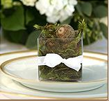 Seeds of Life - wedding favors. Fresh Moss with Tree seed for your growing region inside, rooted, and ready to grow.