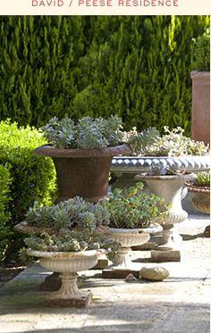 succulents on old pots