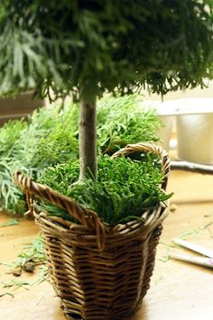 Choinki z gałęzi tui Small Christmas Trees, Christmas Crafts, Tree Decorations, Diy Crafts, Holiday Decor, Floral, Plants, Holiday Crafts, Christmas Decor