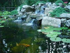 backyard koi pond tricks and tips, landscape, ponds water features, Pond Lilies Diy Water Feature, Backyard Water Feature, Ponds Backyard, Garden Ponds, Pond Maintenance, Goldfish Pond, Pond Fountains, Pond Water Features, Pond Waterfall