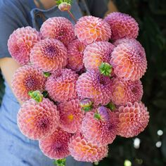 Dahlia Jowey Winnie by Floret Flower Farm Dahlia Care, Dahlia Bouquet, Weird Plants, Types Of Flowers, Rose Flowers, Cut Flowers, Wedding Flowers, Growing Roses, Gardens