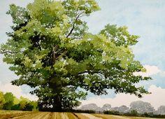Ian Sidaway (1951-) > Summer Oak Petworth   Watercolour, 78 x 92 cm