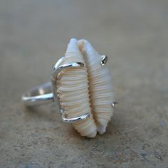 Prong Set Hawaiian Cowrie Shell Ring | Flickr - Photo Sharing!