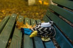 Autumnal coffee in the park by Anna Bogush on 500px