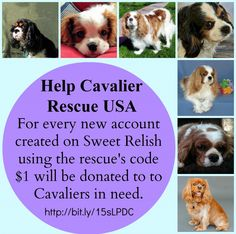 For every sign up on Sweet Relish from Two Little Cavaliers $1 will be donated to Cavalier Rescue USA http://twolittlecavaliers.com/2013/03/sweet-relish-supports-rescue.html
