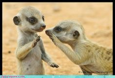 What did one meerkat say to the other meerkat?