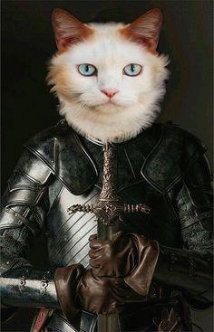 Sur commande d'après la photo de votre chat Party Animals, Animal Party, Portrait Renaissance, Animal Dress Up, Simons Cat, Fancy Cats, Fantasy Photography, Chimera, Cat Costumes