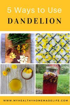 Spring Foraging | Wild Edibles | 5 Ways to Use Dandelions | Herbs ? DIY | Dandelion Salve | Sauteed Dandelion Greens | Dandelion Lemonade | Picked Dandelion Greens | Dandelion Jelly | My Healthy Homemade Life