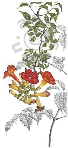 Find This Pin And More On Botanical Art