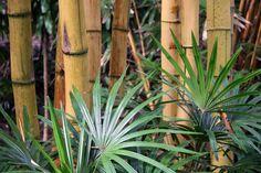 walking thru Palm Trees Landscaping, Balinese Garden, Lucky Bamboo, Fall Gifts, Exotic Plants, Tropical Garden, Ubud, Garden Styles, Grass