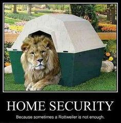 home security Must See Imagery: 32 funny photos to get you through Thursday Funny Lion, Funny Cats, Funny Animals, Cute Animals, Diy Home Security, Home Security Systems, Security Tips, House Security, Security Alarm