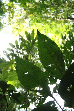 Tonos Verdes... Costa Rica