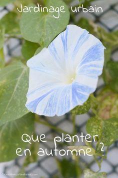 Que planter en automne