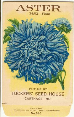 Vintage Flower Seed Packet Tuckers Seed House Lithograph Aster (Carthage, Missouri).