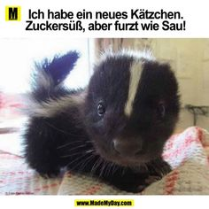 The Internet Needs More Baby Skunks cute animals adorable animal pets baby animals skunk skunks by estelle Funny Animal Memes, Funny Animal Pictures, Funny Animals, Random Pictures, Funniest Pictures, Funny Humor, Animal Funnies, Animal Quotes, Funniest Memes