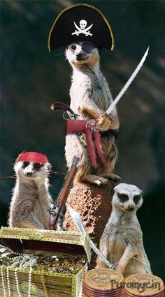 Meerkat Pirates!