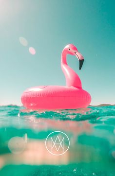 Grab your flamingo and jump into the sea before the summer is over!