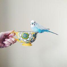 Blue bird & Coffee #bird #crueltyfree www.vainpursuits.com
