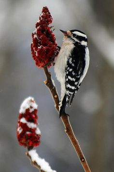 Downy Woodpecker .... My favorite !!! I love the noises they make when they r at the feeder .