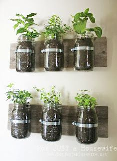 Grow an Herb Garden Inside or Out.. this would be awesome over the kitchen counter...if there's enough light