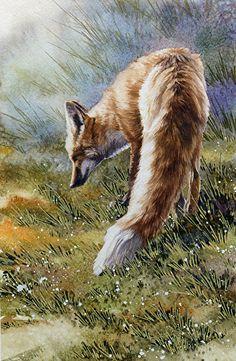 Sly Renard, Red Fox, detail by Joe Garcia Watercolor ~ 15 x 7.25