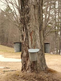 Tapping for maple syrup ... did this many many times while living in Quebec weildkat art and design.com via Lee Ranger onto Ohhhh Canada...Home and Native Land!