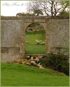 Sheep in English countryside through old stone wall.  Aiken House & Gardens blog: Cotswold Life