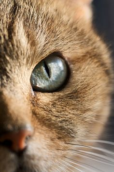 """Nature breaks through the eyes of a cat."" --Irish Proverb"
