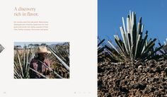 Welcome to a new era of tequila Tequila, Digital Campaign, Polaroid Film, Volcanoes