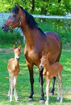 Mare & foals (70 pieces)