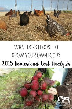 Ever wondered how much does it cost to grow your own food? Here is one homestead's breakdown of expenses, yields, and cost per pound.