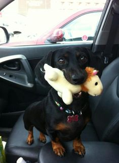 """""""There's no squeaky in this thing. Take it back."""""""