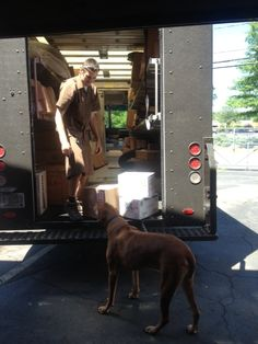All Pets Are Welcome At Honda Yamaha Triumph Kawasaki Of Savannah. Wally  Can Be Found Playing Around The Shop! | Take Your Dog To Work Day 2015 |  Pinterest ...