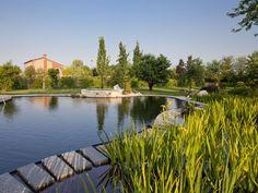 Fitodepurazione, l'utilizzo di piante acquatiche come filtro biologico / Biolaghi, Acqua e Giardino