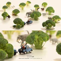 """. 2.20 sat """"Savannah"""" . ブロッコリー1本分のサバンナ . #Broccoli #このあとおいしくいただきました . ーーーーーーー #写真集第2弾予約受付中 #プロフィールのURLから飛べます ."""