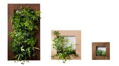 左からmy gallery L W500 H900 D90mm ¥78,750 my gallery M W500 H500 D90mm ¥45,150 my gallery S W300 H300 D65mm ¥16,800(すべて植物付き) 以上 PIANTA×STANZA