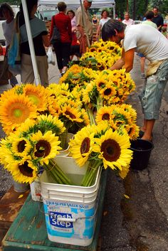 sunflowers at the Farmer's Market, Portland, Maine