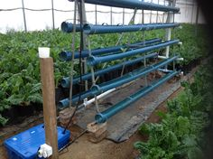 Hydroponic system made with Pvc pipe
