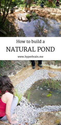 "How to build a natural pond - a step by step guide to natural ponds using simple but effective methods. Anyone can do this! - <a href=""http://www.hyperbrain.me"" rel=""nofollow"" target=""_blank"">www.hyperbrain.me</a>"