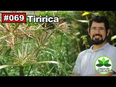 Saúde Pelas Plantas - Tiririca [AVC, câncer, anti-alérgico, febre, colesterol] - YouTube